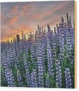 Lupine Dawn Wood Print