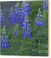 Lupine Family Wood Print