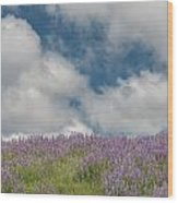Lupine Field Under Clouds Wood Print