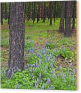 Lupine Forest Wood Print