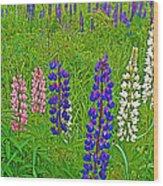 Lupine On Campobello Island-nb Wood Print
