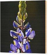 Lupine  Wood Print