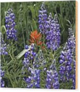 Lupine With Paintbrush 2 Wood Print