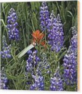 Lupine With Paintbrush Wood Print