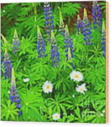 Lupines And Daisies 11 Wood Print