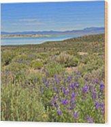 Lupines At Mono Lake Wood Print