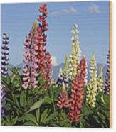 Lupinus Flowers Hokkaido Japan Wood Print