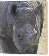 Lurching Rhino Wood Print