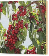 Luscious Cherries Wood Print