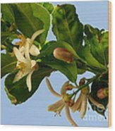 Luscious Lemon Promise Wood Print