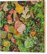 Luscious Lettuce Wood Print