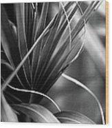 Luscious Lines Wood Print