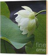 Luscious Lotus Wood Print