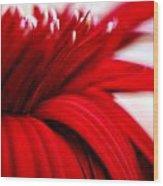 Luscious Red Flower Wood Print