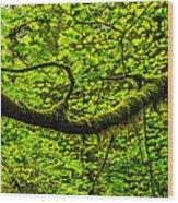 Lush Wood Print by Chad Dutson
