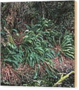 Lush Ferns Of The Forest Wood Print