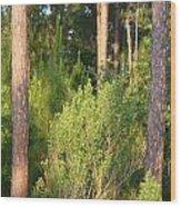 Lush Forest Wood Print