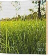 Lush Grass Wood Print