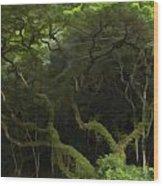 Lush Green Wood Print