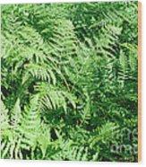 Lush Green Fern Wood Print