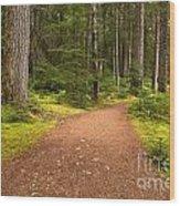 Lush Green Forest At Cheakamus Wood Print