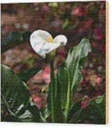 Lush Lily Wood Print