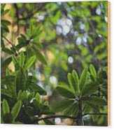 Lush Rhododendron Forest Wood Print
