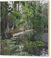 Lush Swamp Vegetation Wood Print
