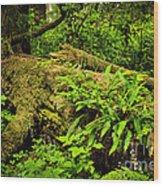 Lush Temperate Rainforest Wood Print