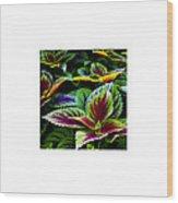 Lush_09.29.12 Wood Print
