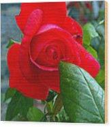 Luss Rose Wood Print