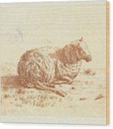 Lying Sheep, Ernst Willem Jan Bagelaar Wood Print