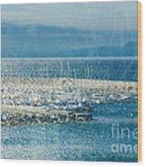 Lyme Regis Under Glass Wood Print