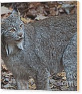 Lynx Eyes Wood Print