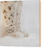 Lynx Feet Wood Print