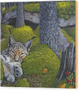 Lynx In The Sun Wood Print