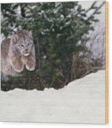 Lynx Leaping Wood Print