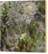 Lynx Spider And Young Wood Print