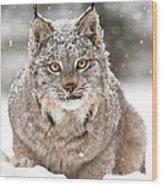 Lynx Stare Wood Print