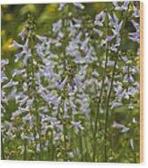 Lyreleaf Sage Wildflowers - Salvia Lyrata Wood Print
