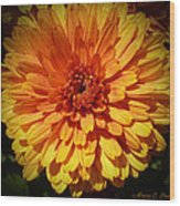 M Bright Orange Flowers Collection No. Bof8 Wood Print by Monica C Stovall