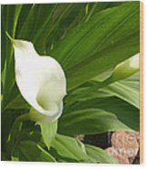 M White Flowers Collection No. W5 Wood Print