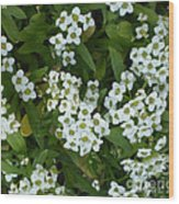 M White Flowers Collection No. W6 Wood Print