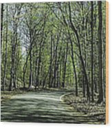 M119 Tunnel Of Trees Michigan Wood Print