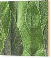 M7500790 - Sage Leaves Wood Print