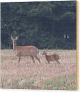 Mable The Female Deer With Harriet The Baby Fawn Wood Print