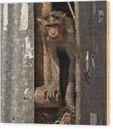 Macaque Peeking Out Wood Print