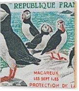Macareux Seven Islands Conservation Wood Print