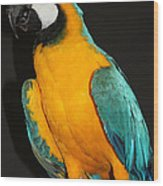 Macaw Hanging Out Wood Print