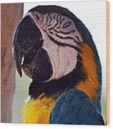 Macaw Head Study Wood Print